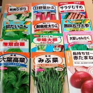 秋冬まき オススメ5種類 温暖地域 畑向き 野菜の種 小分け 野菜の種子