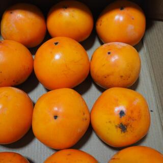 鳥取県産 御所柿