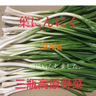 葉にんにく 300g 朝採り新鮮 三瓶高原野菜(野菜)