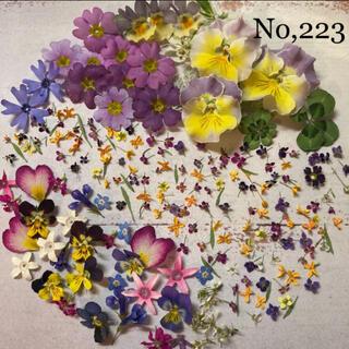 No,223    ドライフラワー素材(ドライフラワー)