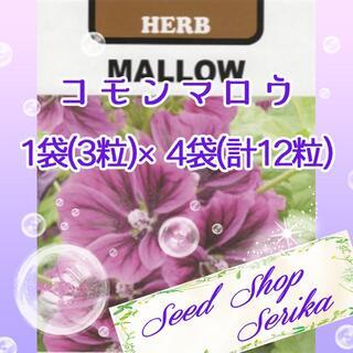 コモンマロウ 家庭菜園 野菜 ハーブ 種(その他)