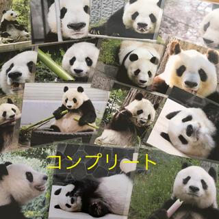 ♦️新作15枚♦️王子動物園 パンダポストカード 旦旦 タンタン 神戸パンダ