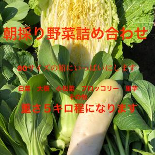 朝採り野菜詰め合わせ 11/26収穫分