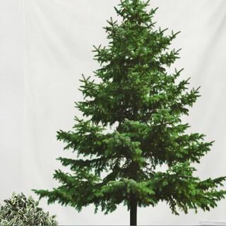 クリスマスツリー タペストリー 壁掛け 送料無料