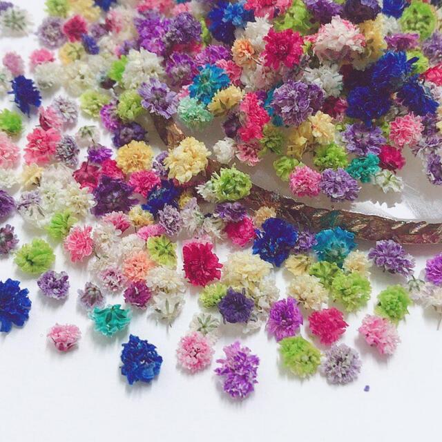 かすみ草 ドライフラワー 訳あり250粒 ハンドメイドのフラワー/ガーデン(ドライフラワー)の商品写真