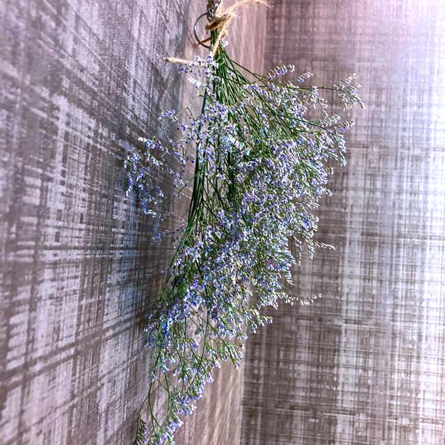 ドライフラワー花材 ミスティブルー ハンドメイドのフラワー/ガーデン(ドライフラワー)の商品写真