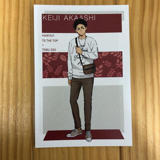 集英社 - 東武動物公園 ハイキュー!! ポストカード レジャーVer. 赤葦京治