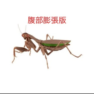 BANDAI - バンダイ オオカマキリガチャ 褐色 腹部膨張版