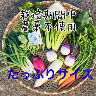 【たっぷりサイズ】栽培期間中農薬不使用 旬彩野菜バスケット(野菜)