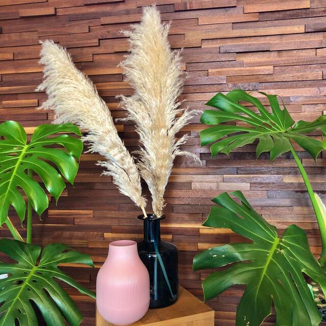 特大パンパスグラス 晩生タイプ 限定2本セット ハンドメイドのフラワー/ガーデン(ドライフラワー)の商品写真
