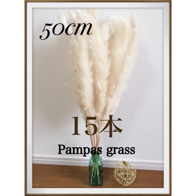 Francfranc(フランフラン)のそのままご購入◎ パンパスグラス 15本 50cm ハンドメイドのフラワー/ガーデン(ドライフラワー)の商品写真