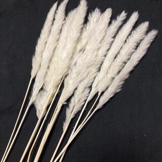テールリード ❁ 白 1袋10本 パンパス パンパスグラス ホワイト(ドライフラワー)