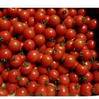 熊本県産ミニトマト約3kg
