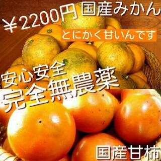 【 完全無農薬 】 めっちゃ甘~い 無農薬 国産 果物詰め合わせ 甘柿 みかん(野菜)