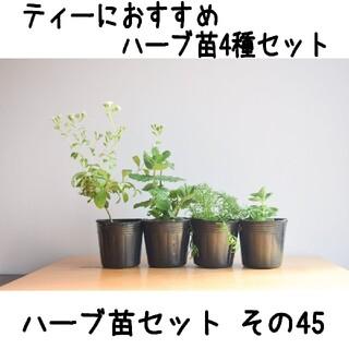ハーブ苗セット その45 ティーにおすすめハーブ苗4種セット 要望対応可!(プランター)