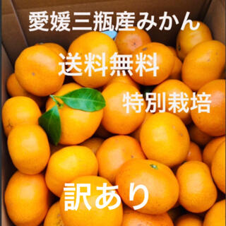 愛媛三瓶産みかん 訳あり 10kg(フルーツ)