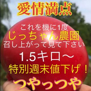 週末お値下げ!早い者勝ち! トマト とまと ハウス野菜 ハウス栽培(野菜)