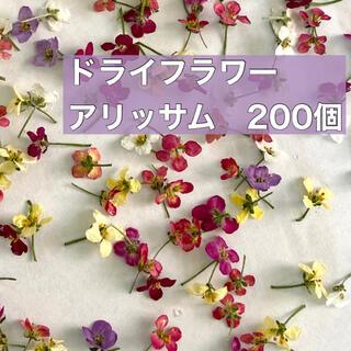 アリッサム 200個+おまけ40個 ドライフラワー   花材 小花(ドライフラワー)