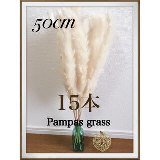 即購入OK♡ パンパスグラス  50cm 15本(ドライフラワー)