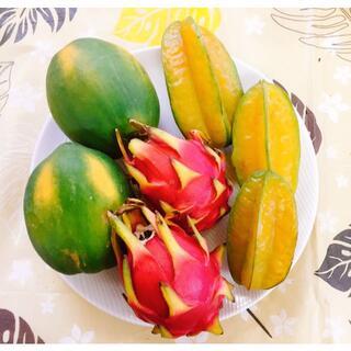 沖縄本島産 今季最後のドラゴンフルーツとパパイヤ・スターフルーツS(フルーツ)