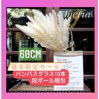 即購入ok !白パンパスグラス10本(ドライフラワー)