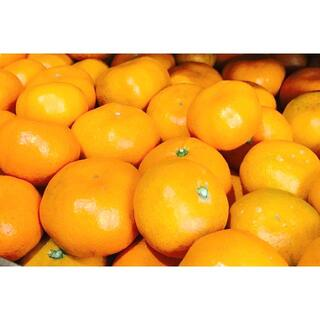 ★山北みかん★【温州みかん 5キロ 】★採れたて直送!★ フルーツ 柑橘類 蜜柑