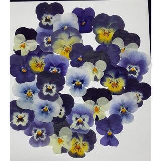 押し花 ビオラ ブルー系(ドライフラワー)