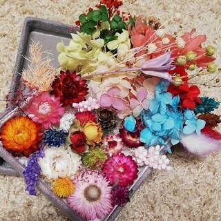 花材 ハーバリウム花材 プリザーブドフラワー ドライフラワー 在庫整理(ドライフラワー)