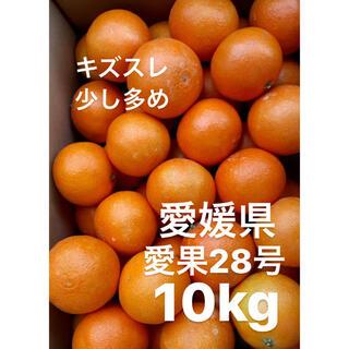 ・訳あり 愛媛県 愛果28号 10kg(フルーツ)
