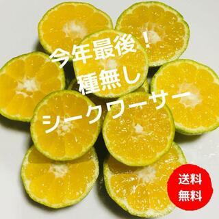 【種なし】効能がすごい!初物!沖縄特産シークワーサー ぎっしり800g(フルーツ)