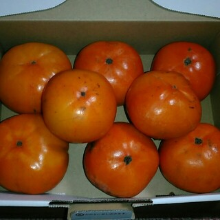 値下げ◎数量限定【無農薬】神奈川県産の柿(フルーツ)