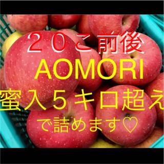 青森 りんご 蜜入 サンふじ 5キロ(フルーツ)