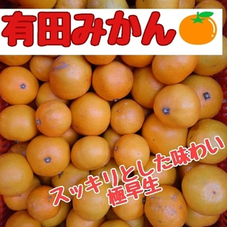 有田みかん5㎏(極早生品種・家庭用)(フルーツ)