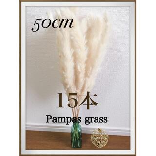 ★50cm ラクマのみ限定出品★ パンパスグラス 15本(ドライフラワー)