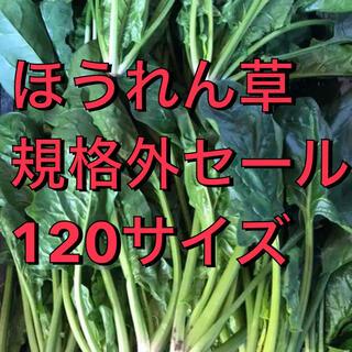 福岡県産★ほうれん草 規格外セール 栽培期間中農薬不使用 朝摘み120サイズ(野菜)
