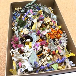 [訳あり品]花材増量パック 小花と花びらと葉と木の実 ドライフラワー U(ドライフラワー)