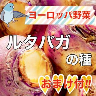 【希少オマケ付き‼️】ルタバガの種10粒 野菜 かぶ カブ ヨーロッパ野菜 種(野菜)