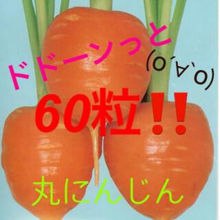 丸にんじん ドトーンっと!! 種60粒!!(野菜)