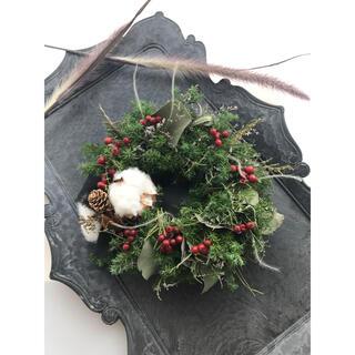 fresh Xmas wreathe リース ドライフラワー(ドライフラワー)