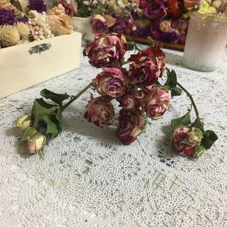 ❀✿୨୧⑅*スプレー薔薇 1本❀✿୨୧⑅*.❀✿(ドライフラワー)