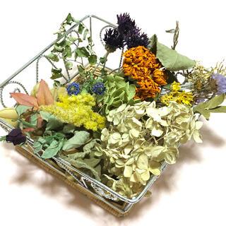 ナチュラルなドライフラワー 花材 素材 アラカルト アンティーク V(ドライフラワー)