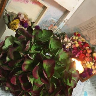 ❀✿୨୧⑅*.紫陽花 ドライフラワー 花材 インテリア୨୧⑅*.❀✿(ドライフラワー)