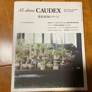 All about CAUDEX 塊根植物のすべて(趣味/スポーツ/実用)