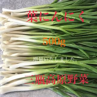 葉にんにく 500g 朝採り新鮮 島根の高原野菜(野菜)