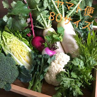 冬野菜のセット ヤマト便80サイズ 野菜詰め合わせ(野菜)