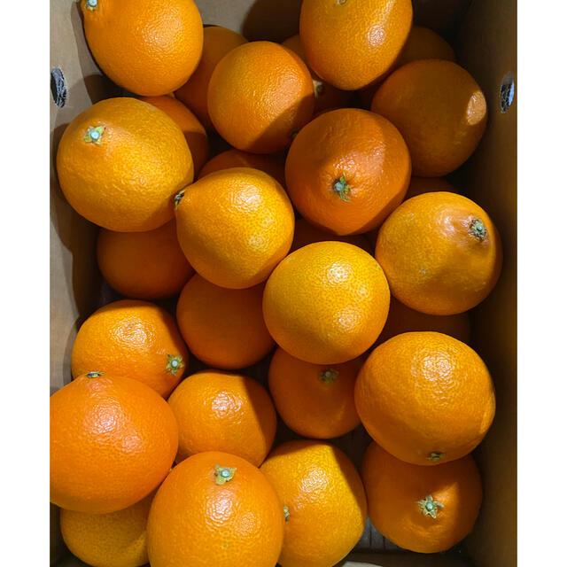 あいか  Lサイズ 食品/飲料/酒の食品(フルーツ)の商品写真