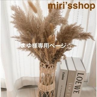 パンパスグラス まゆ様専用ページ☆(ドライフラワー)