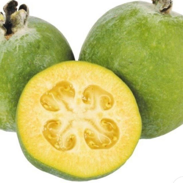 フェイジョア/挿し穂 食品/飲料/酒の食品(フルーツ)の商品写真