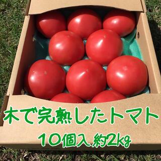 木成り完熟八風とまと10個入 約2kg(野菜)