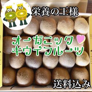 ② キウイ 国産 未完熟 キウイフルーツ(フルーツ)